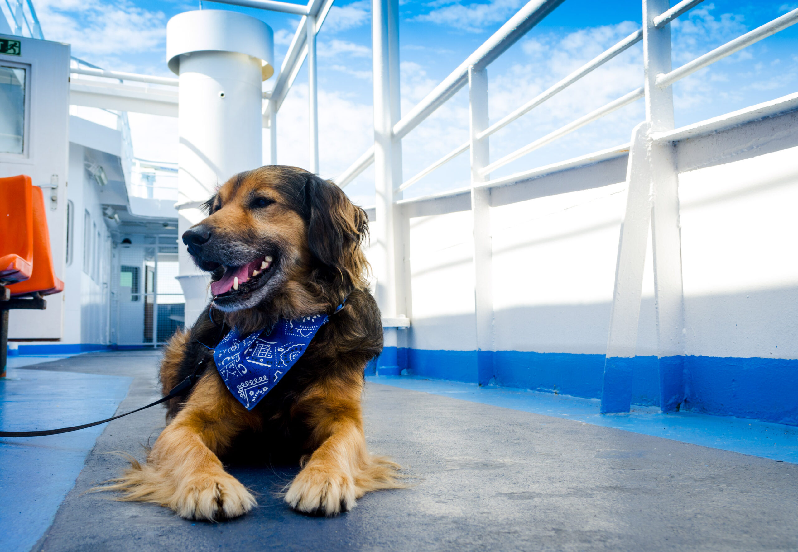 Travelling with a dog – On the ferry.
